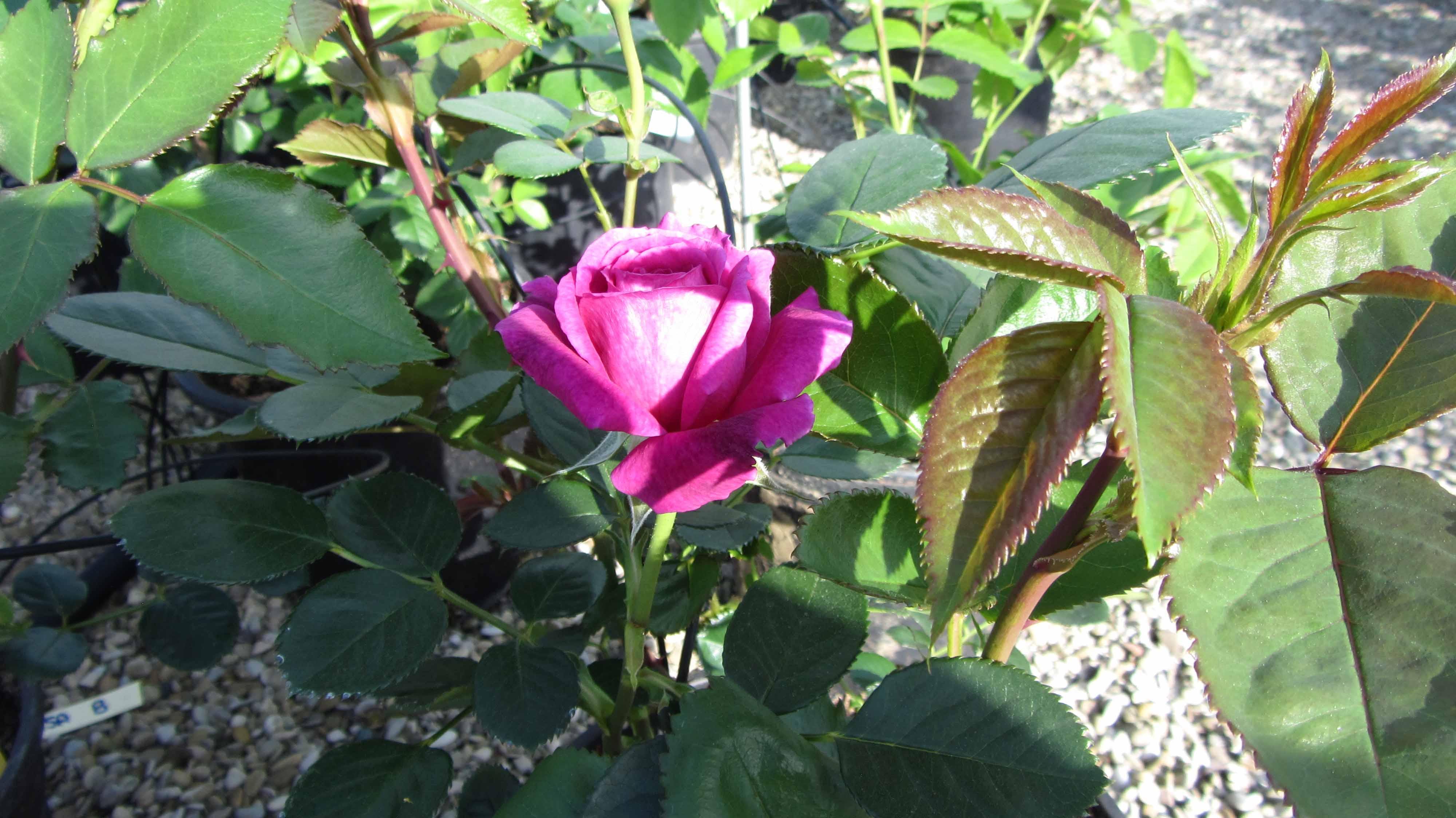 AL VIVAIO VIVAVERDE - Nel Giardino, Nella Natura