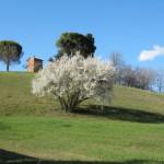 fioritura nei pressi di Parco Tozzoni